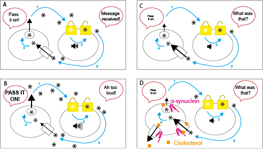 A series of 4 cartoons summarising how α-synuclein changes the comings and goings of dopamine. Step 1 shows 'pass it on' and 'message received'. Step 2 shows 'pass in on' and 'what was that?' Step 3 shows 'pass it on' and 'Ah too loud!' Step 4 shows 'pass it on' and 'what was that?'