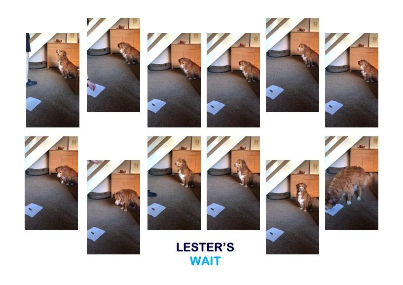 LESTER.jpg